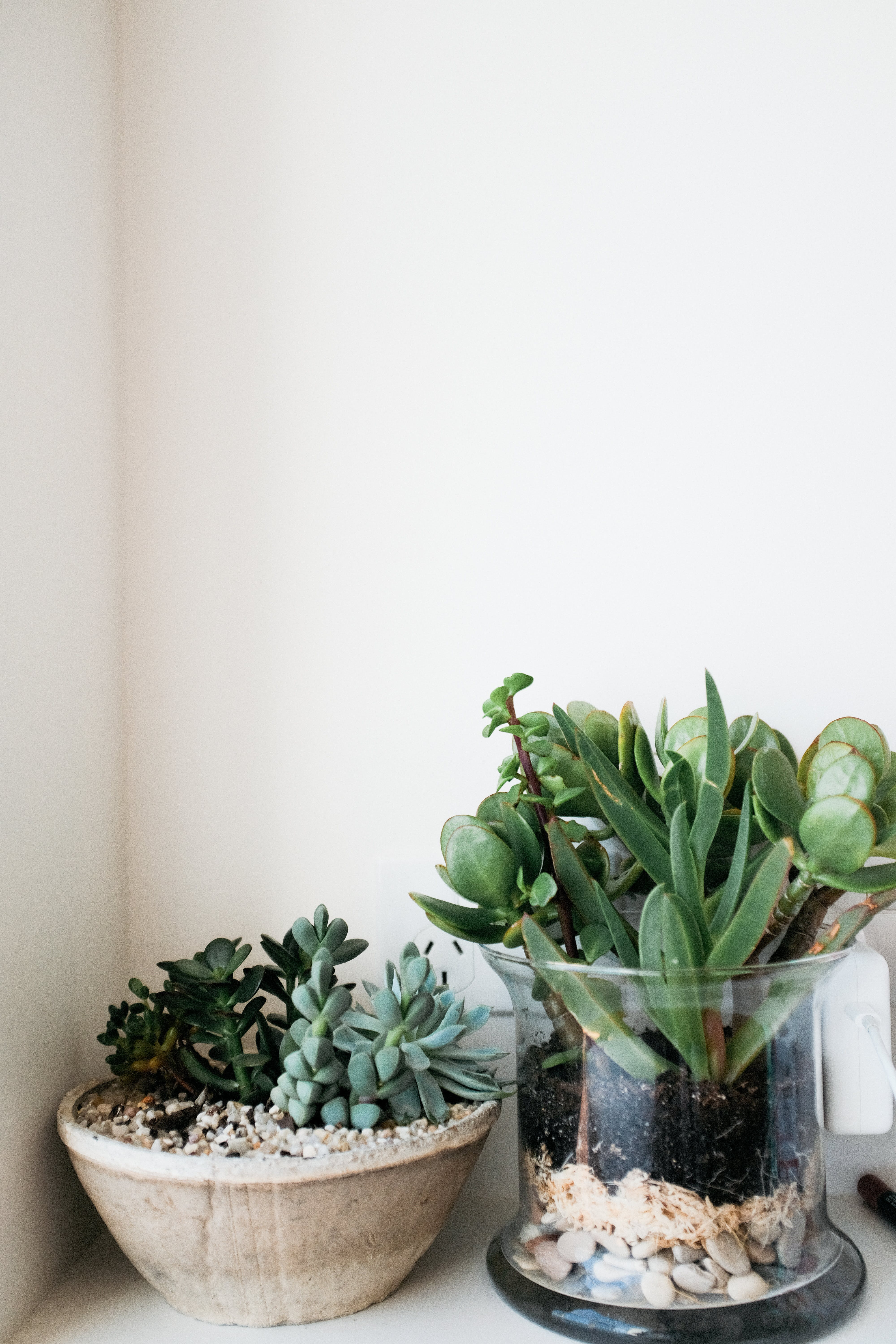 Green Succulents In Bowls