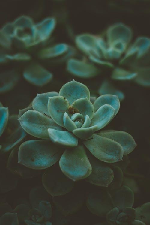 คลังภาพถ่ายฟรี ของ ซักคิวเลนต์, ต้นไม้, สีเขียว