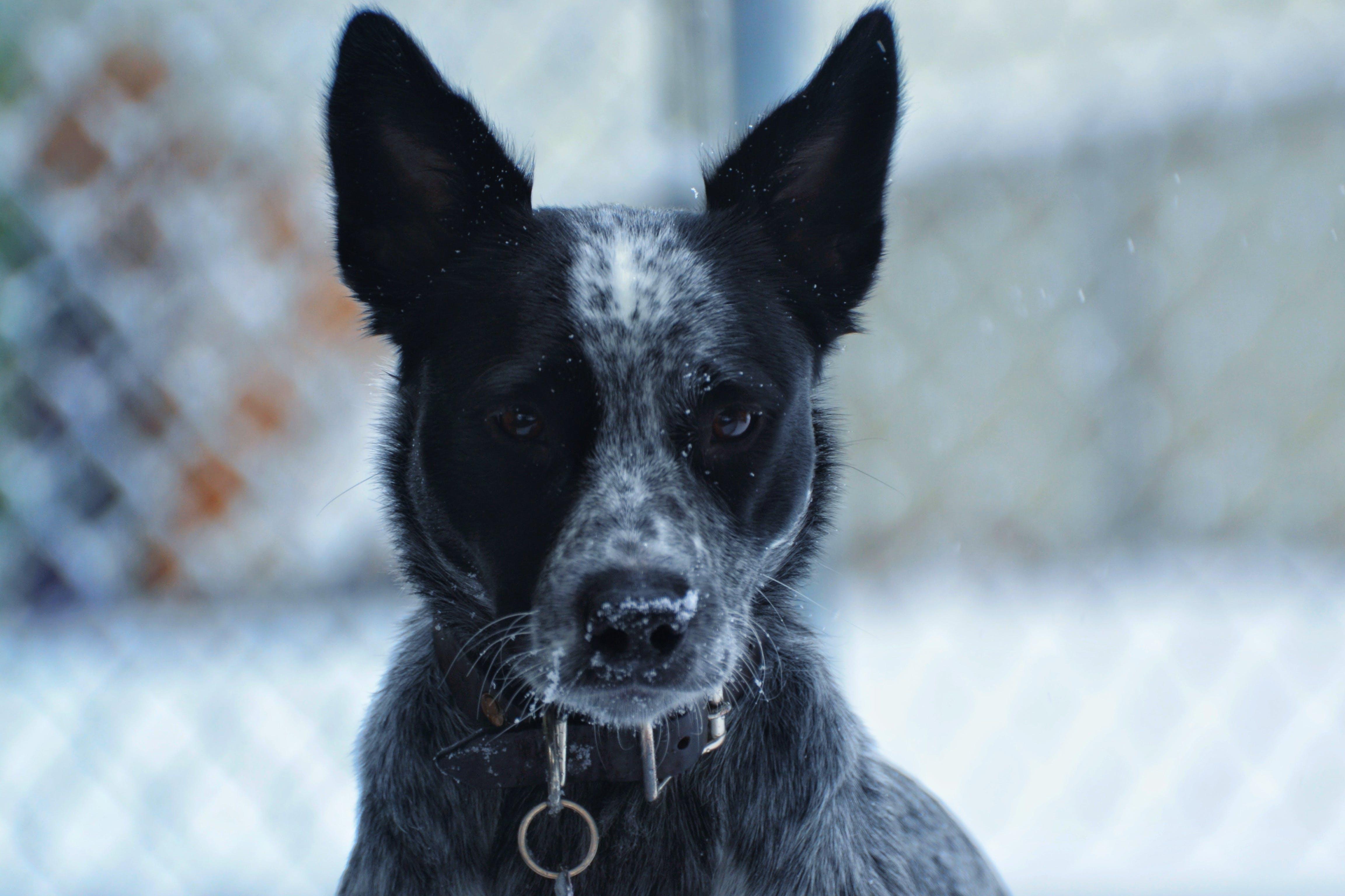 Základová fotografie zdarma na téma domácí mazlíček, domácí zvíře, pes, plemeno