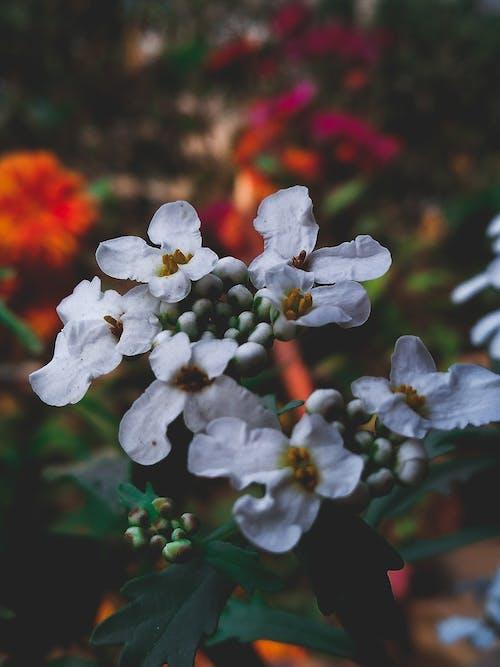 คลังภาพถ่ายฟรี ของ ดอกไม้สวย, พืชสีเขียวเข้ม, วินเทจ, เขียวเข้ม