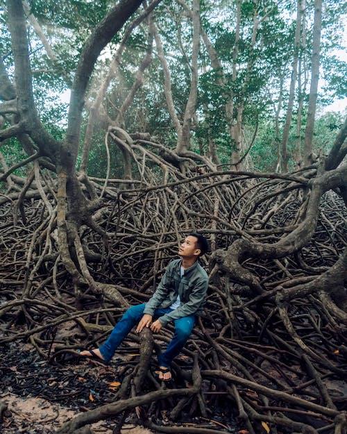 Imagine de stoc gratuită din băiat, codru, faleză, mangrove