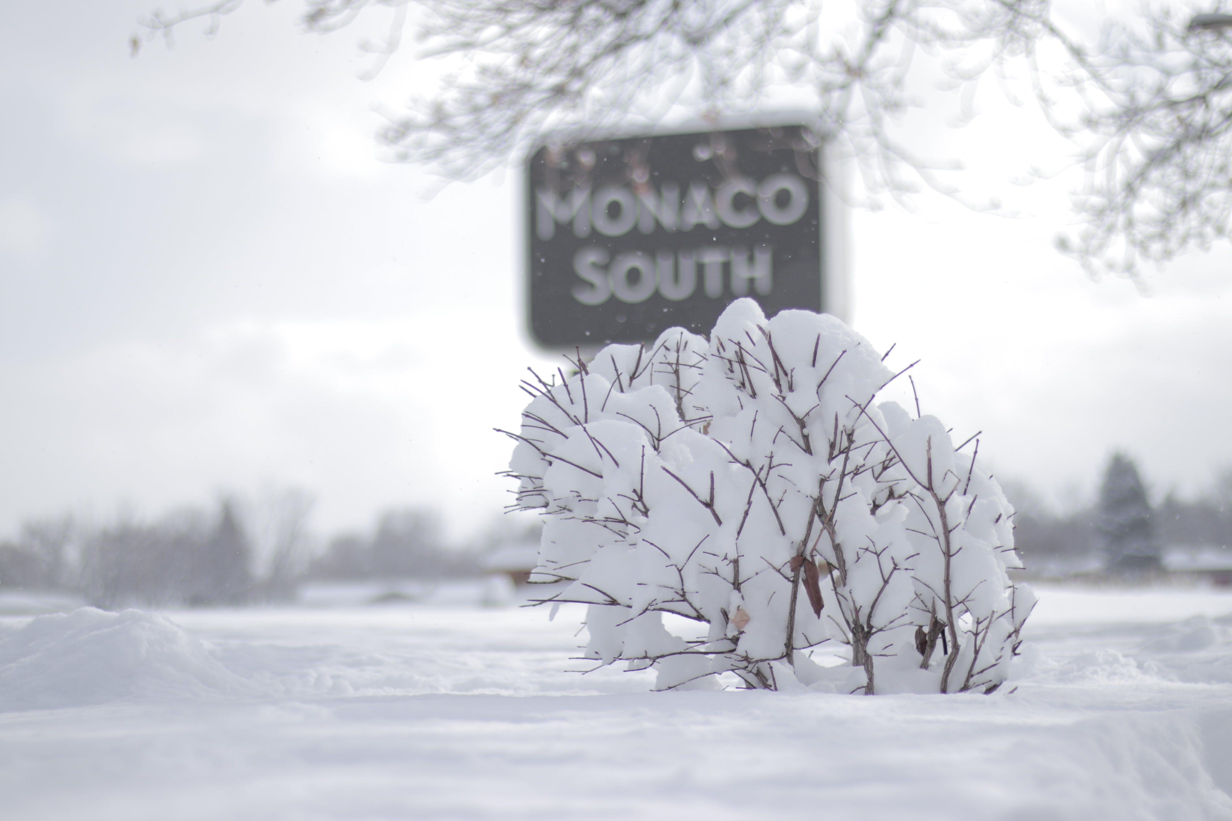 Darmowe zdjęcie z galerii z 2019, usa, zima