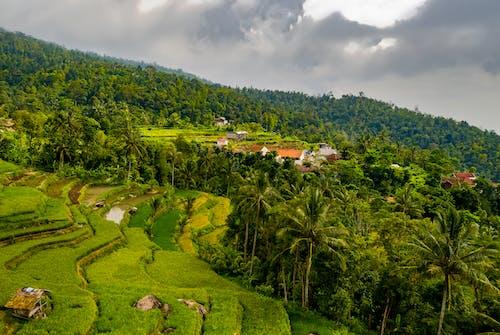 印尼, 增長, 多雲的, 天性 的 免費圖庫相片