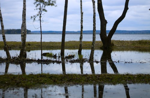 Free stock photo of dry grass, forest, nature, reflection