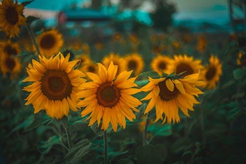 Free stock photo of beautiful, beauty, blossom, bright