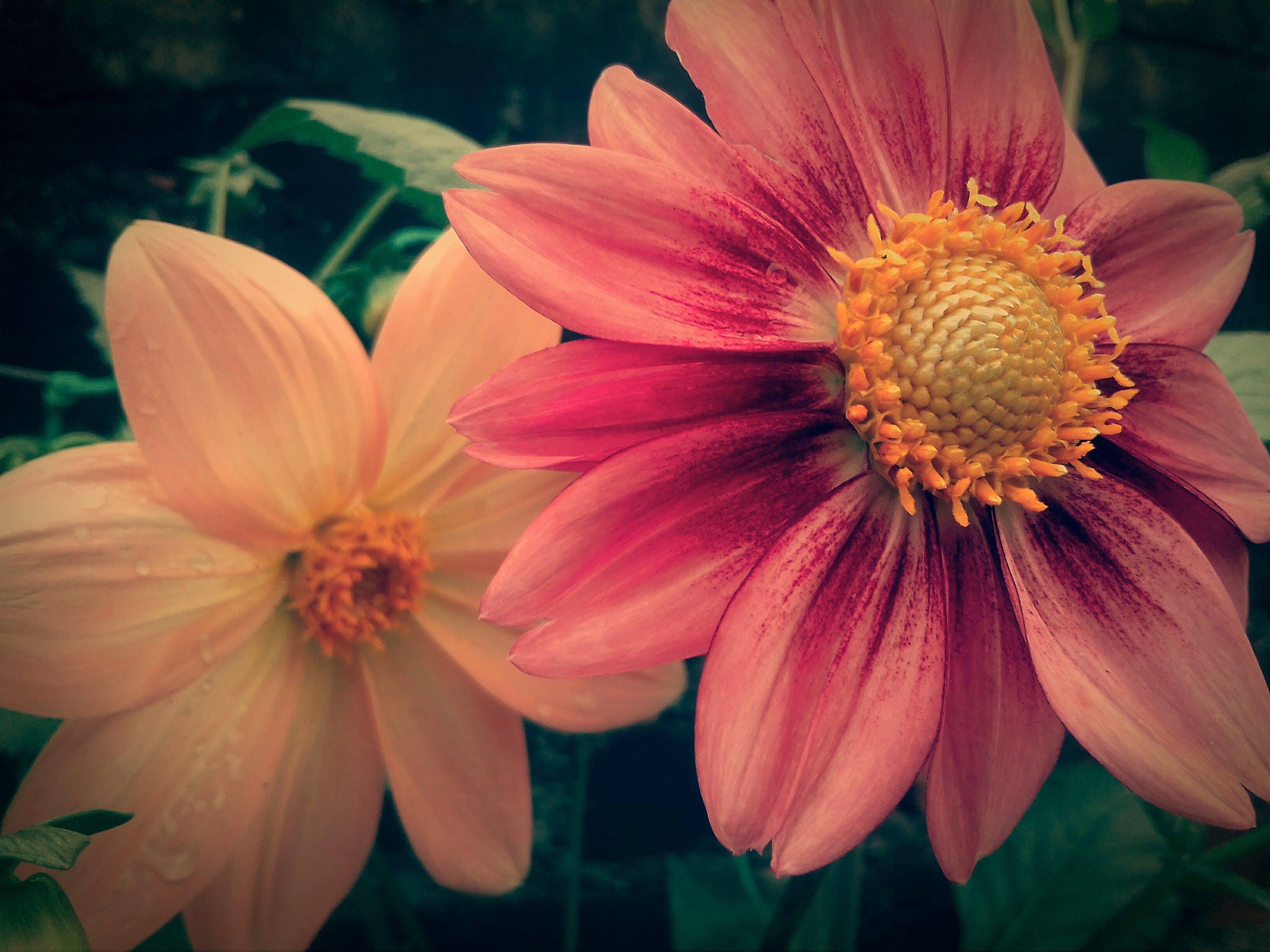 Gratis lagerfoto af baggrundsbillede, blomst, blomst tapet, blomsterbuket