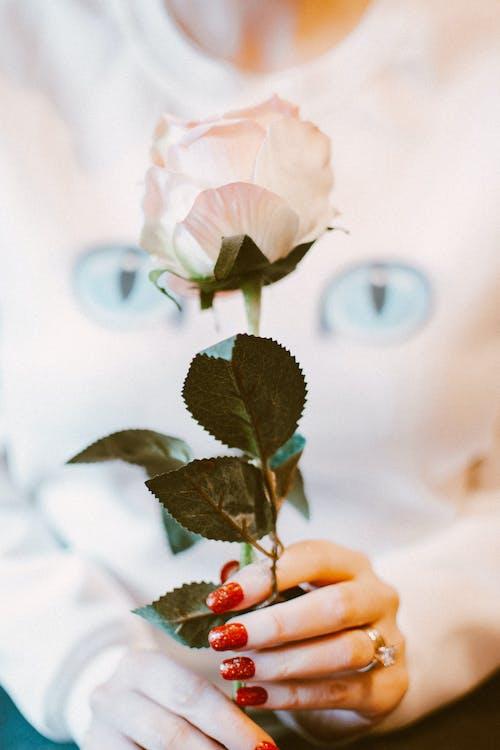 Imagine de stoc gratuită din floare, floră, înflorire, mână