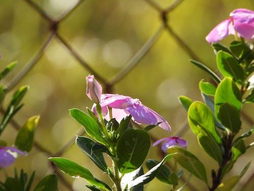 Free stock photo of bestestimes, flowers, nikon p1000