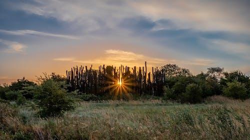 Δωρεάν στοκ φωτογραφιών με Ανατολή ηλίου, ήλιος, μπλε, ουρανός