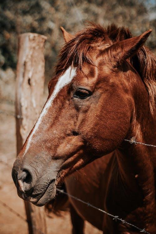Kostnadsfri bild av boskap, brun, däggdjur, djur