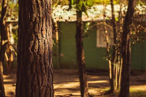 Foto profissional grátis de castanho, cinemático, fotografia da natureza, fundo da natureza