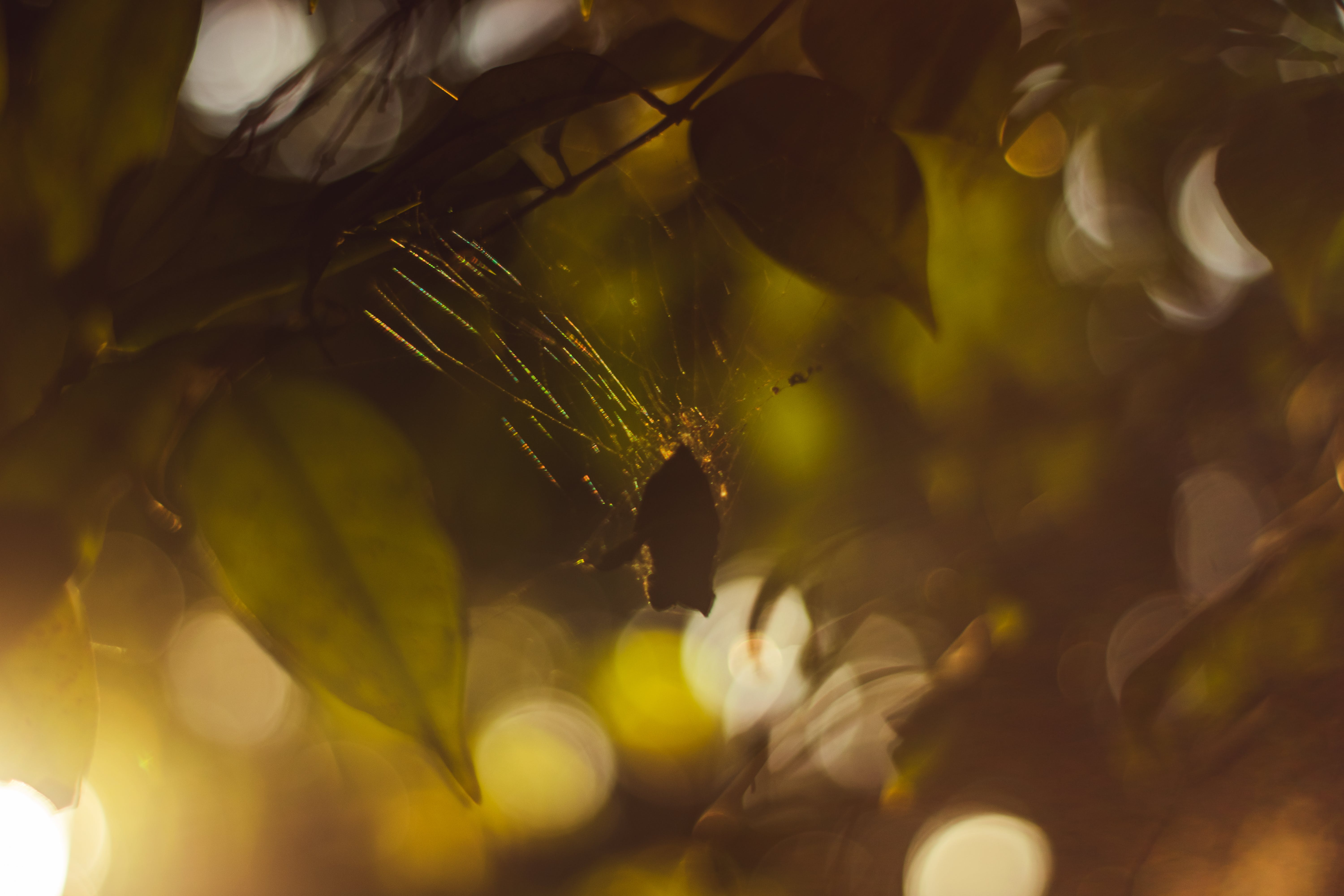 Free stock photo of brown, nature, spider, trees