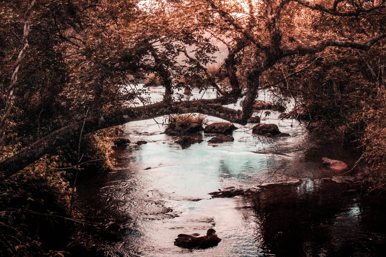 シーズン, フロー, 岩, 急流の無料の写真素材