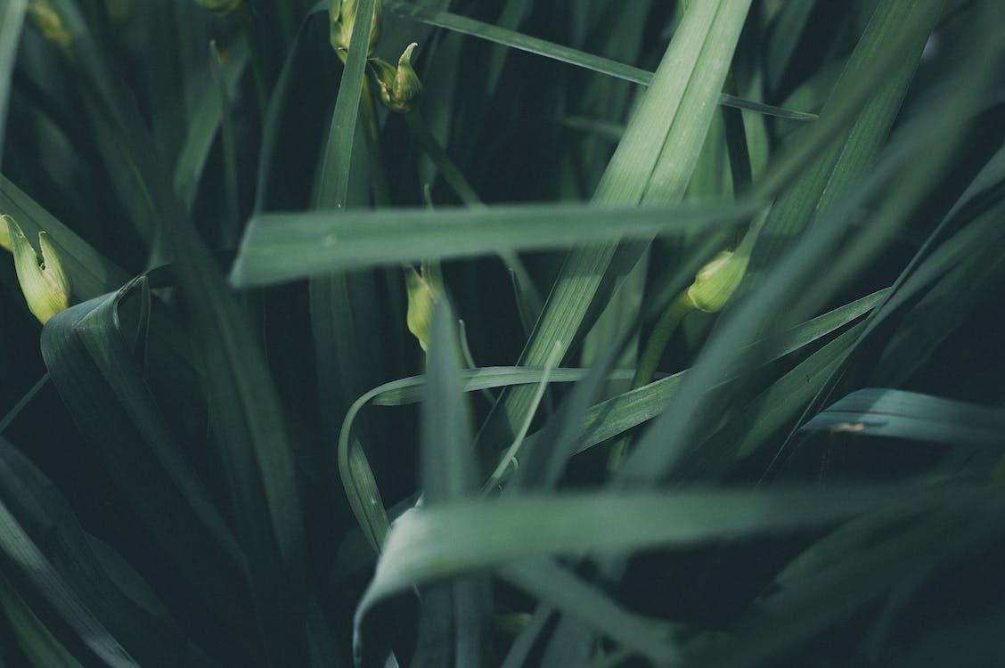 工場, 緑, 草