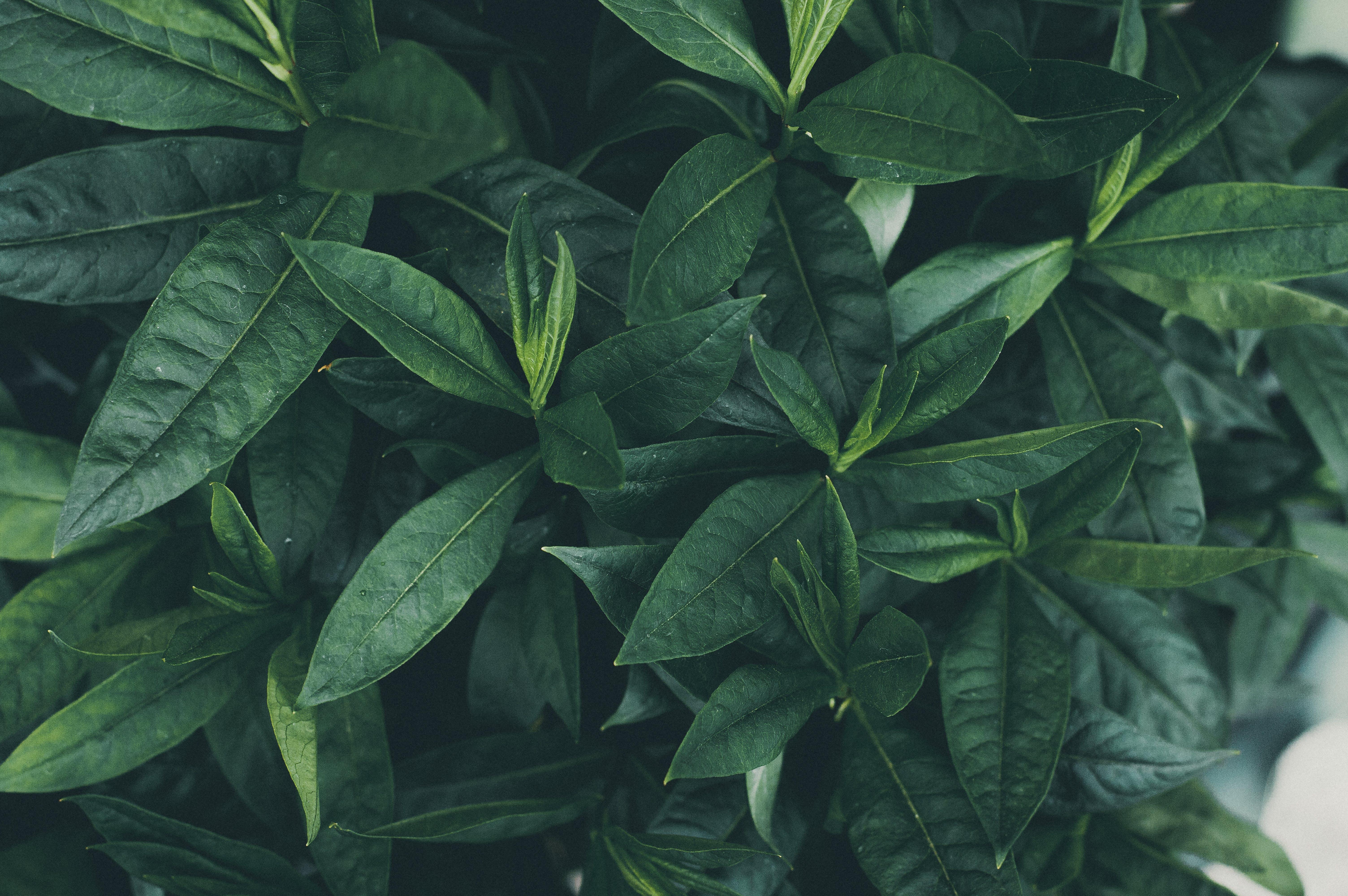 Безкоштовне стокове фото на тему «завод, зелений, сад»