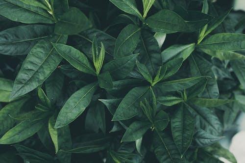 Бесплатное стоковое фото с завод, зеленый, сад