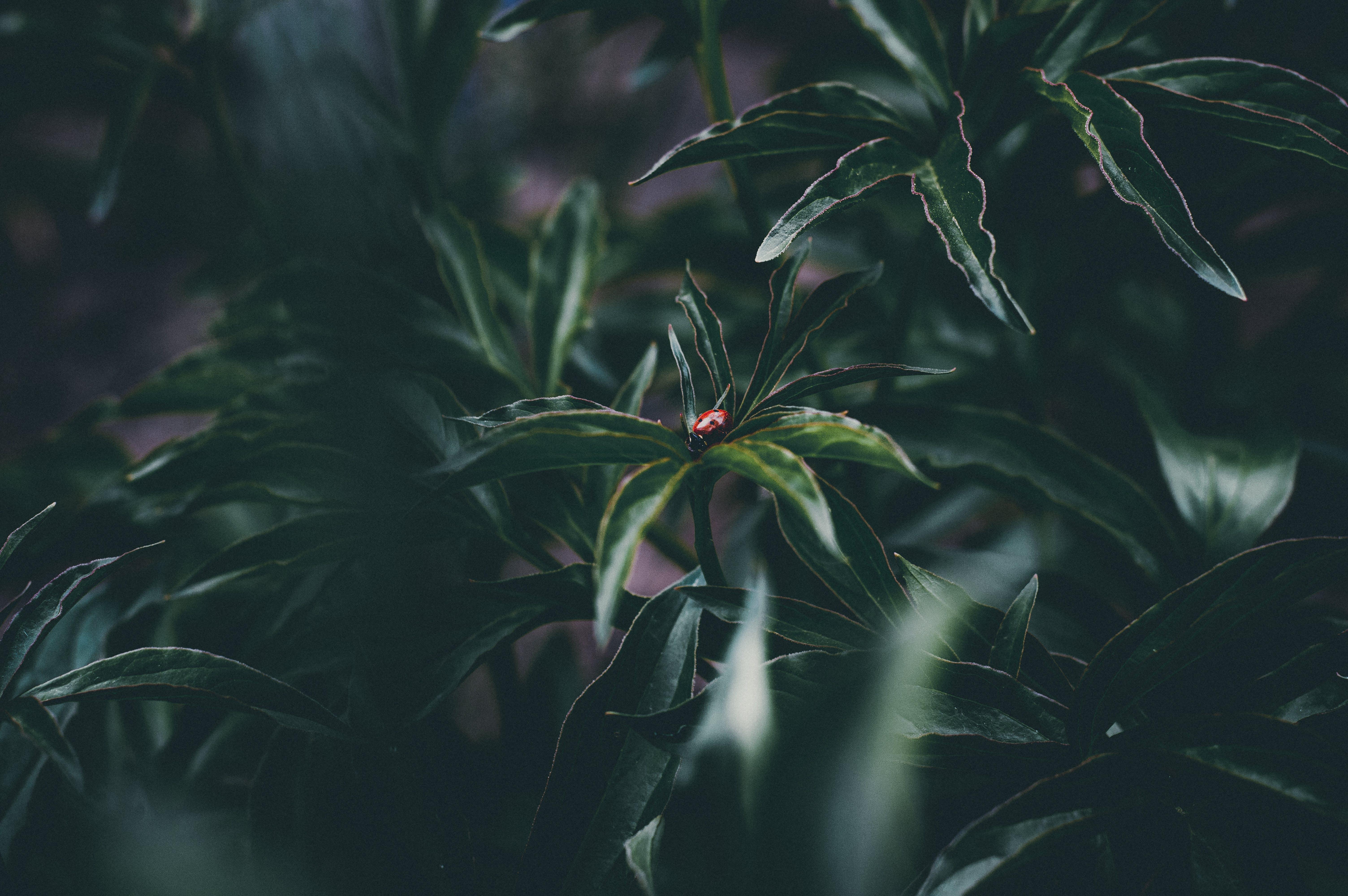 bitxo, botànic, color