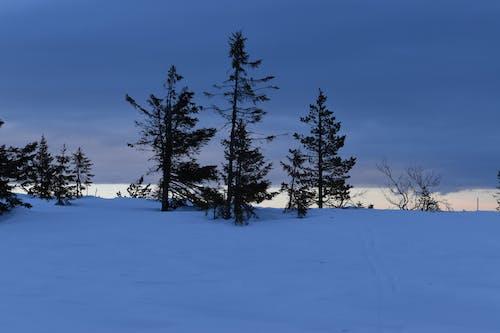 Безкоштовне стокове фото на тему «засніжений, зима, зимовий пейзаж»