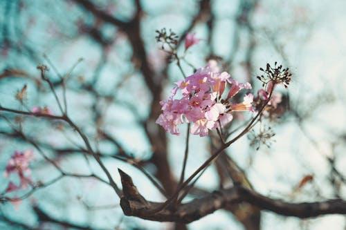 คลังภาพถ่ายฟรี ของ ดอกไม้บาน
