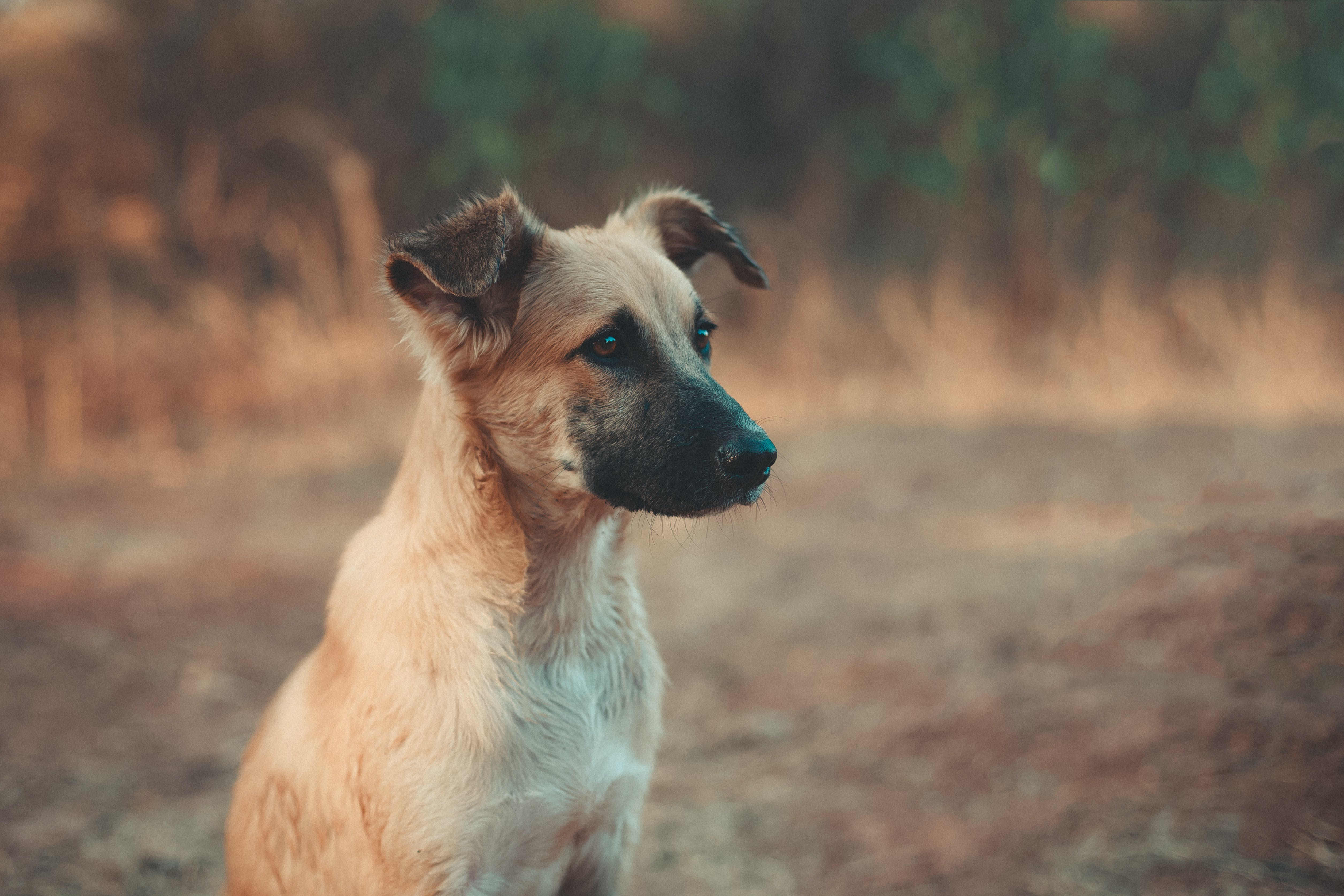 Kostnadsfri bild av däggdjur, djur, hund, husdjur
