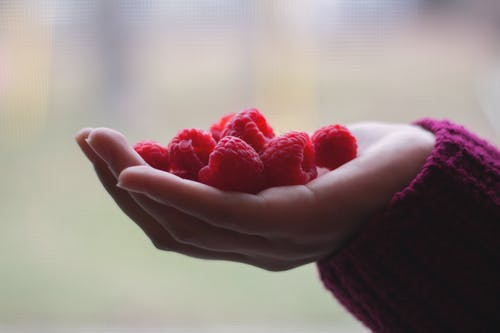 Person Holding Bunch of Raspberries