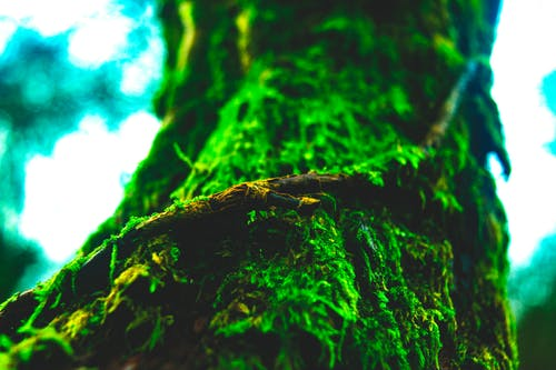 Free stock photo of beauty in nature, brown, close up, contrast