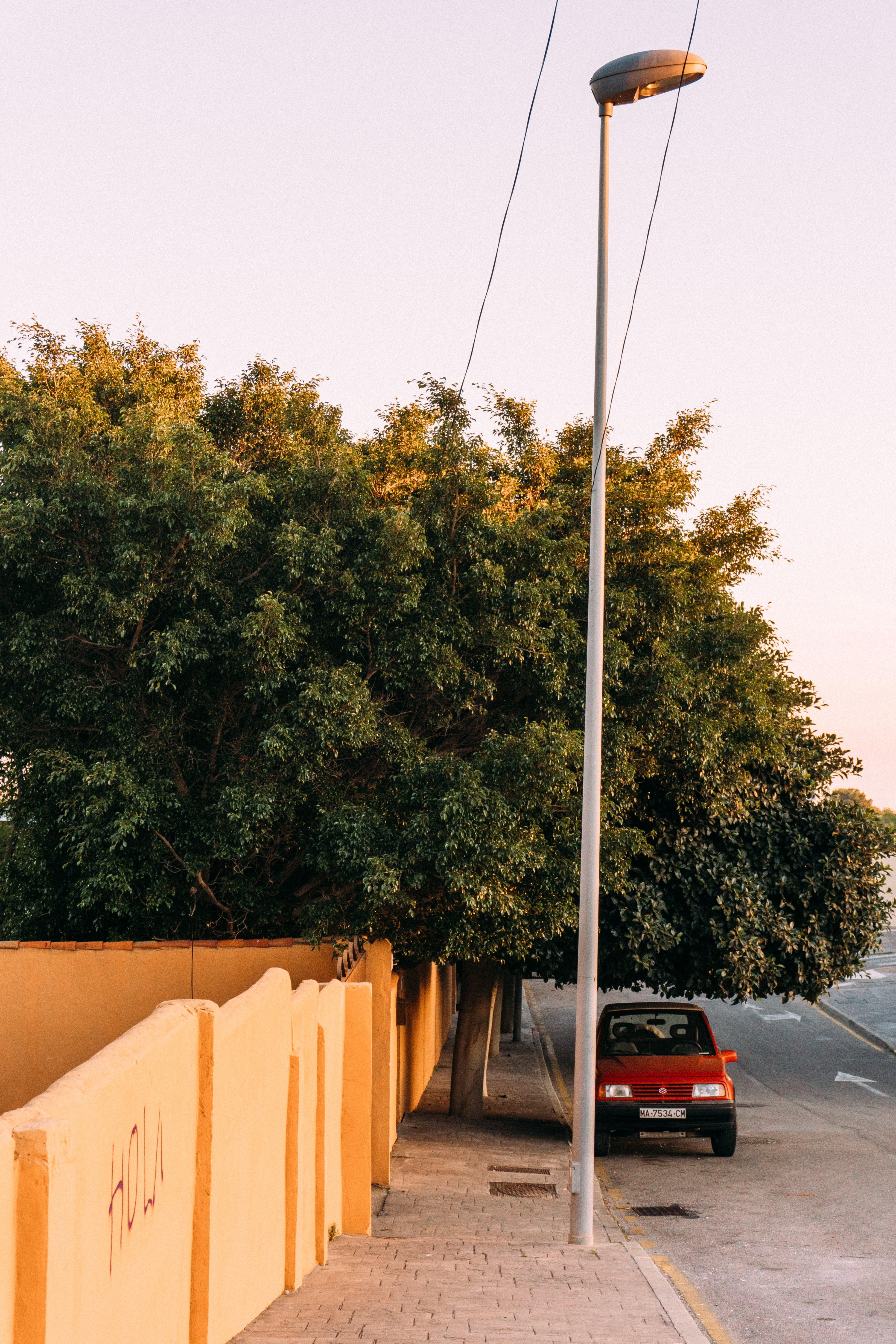 Foto profissional grátis de árvore, automóvel, estrada, poste de iluminação