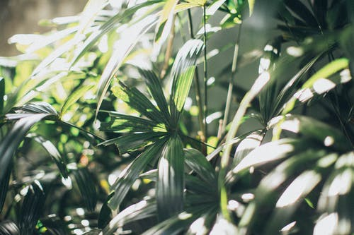 宏觀, 工厂, 綠色, 花園 的 免费素材照片