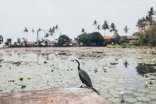 動物, 池塘 的 免費圖庫相片