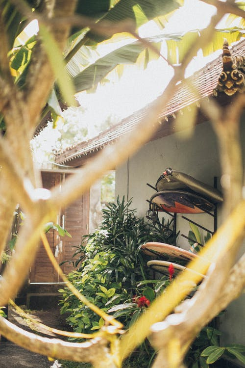 ánh sáng ban ngày, cận cảnh, cây