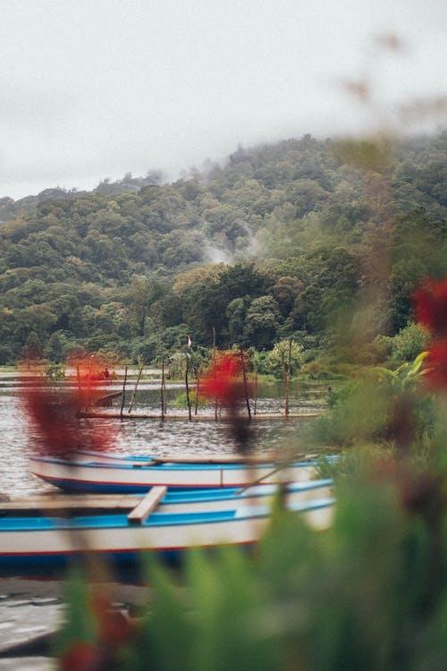 ağaçlar, doğa, gemiler, gökyüzü içeren Ücretsiz stok fotoğraf