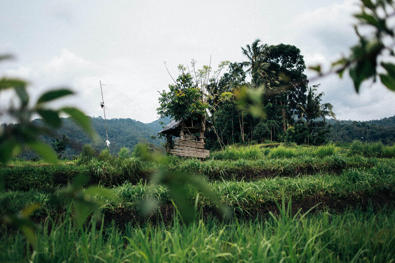 Imagine de stoc gratuită din arbori, câmp, creștere, cultură
