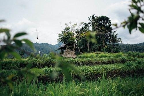 경치, 경치가 좋은, 국가, 나무의 무료 스톡 사진