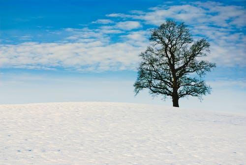 Безкоштовне стокове фото на тему «блакитне небо, голі дерева, мінімалізм, самотнє дерево»