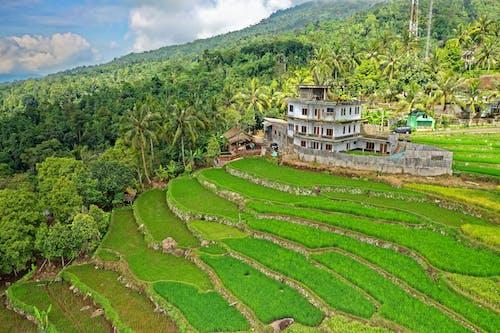 Foto profissional grátis de aéreo, aerofotografia, área, arrozal
