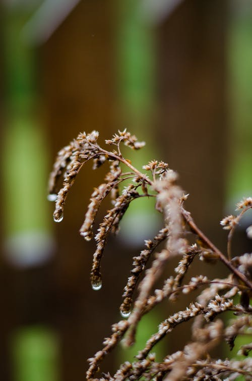 Free stock photo of beauty in nature, droplets, flowers, nature