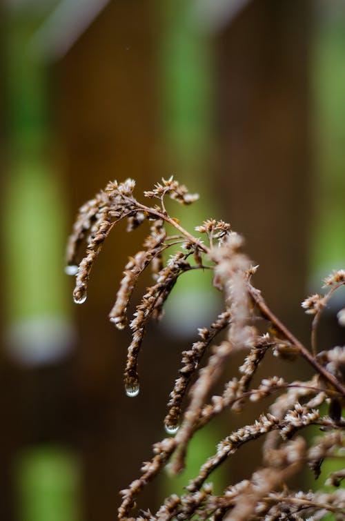 Kostnadsfri bild av blommor, droppar, natur, skönhet i naturen