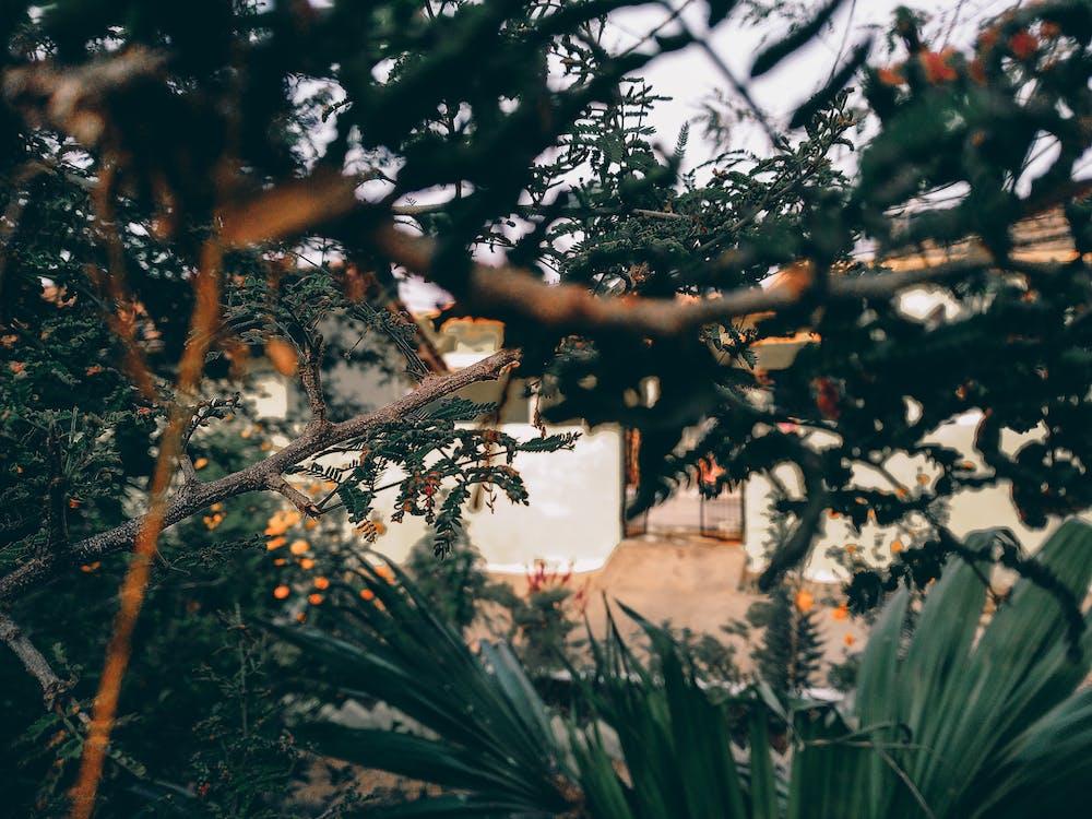 branches, nature, vert foncé