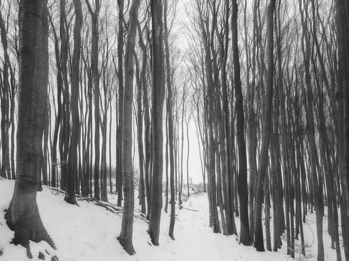 Photo of Bare Trees During Winter