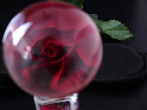 Free stock photo of glass ball, red, romantic, rose