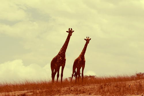 Free stock photo of africa, african, Animal Kingdom, animals