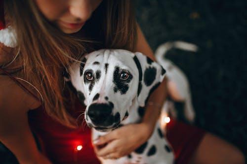 Selective Focus Photography of Woman Holding Adult Dalmatian Dog