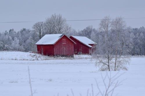 Δωρεάν στοκ φωτογραφιών με δασικός, χειμερινή χώρα των θαυμάτων, χειμερινό τοπίο, χειμώνας
