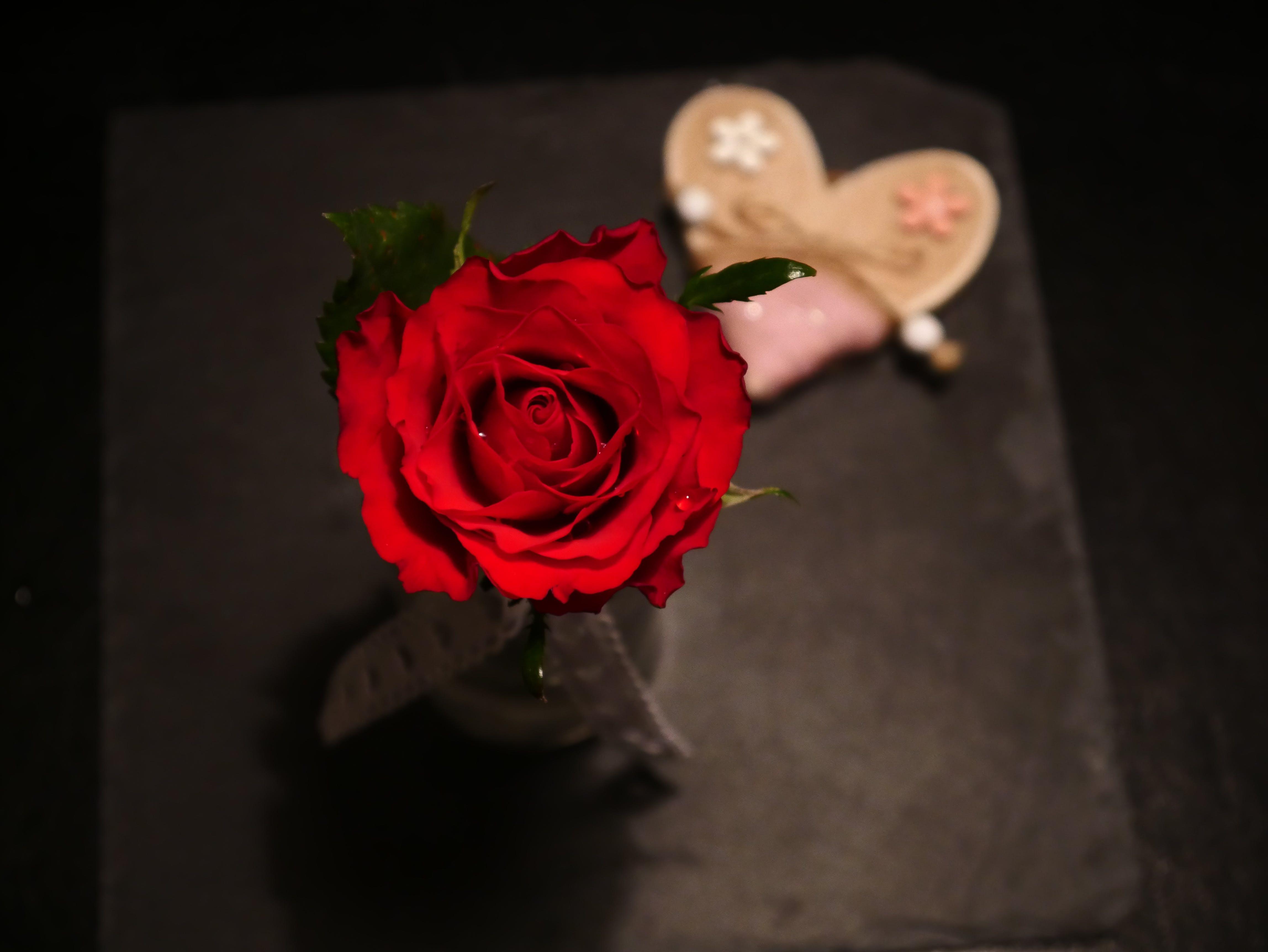 Kostenloses Stock Foto zu herz, liebe, rose, rot