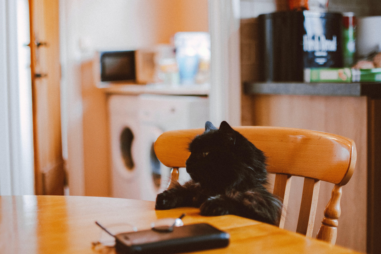 Close-Up Photo of Black Cat