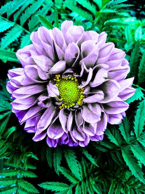 Gratis stockfoto met Bos bloemen