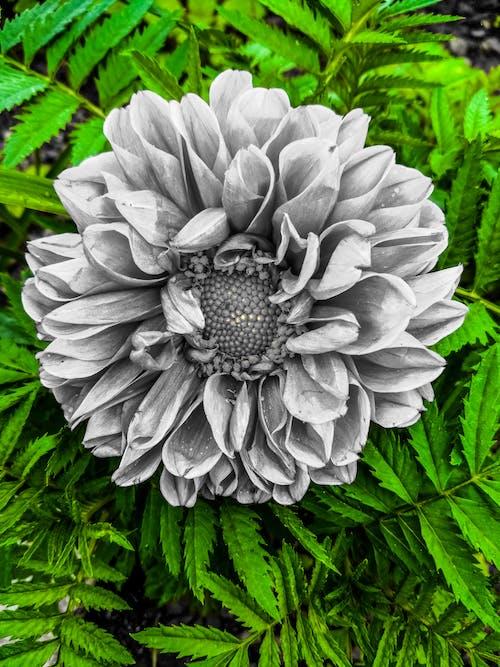 Gratis stockfoto met blauwe bloem, donkergroen
