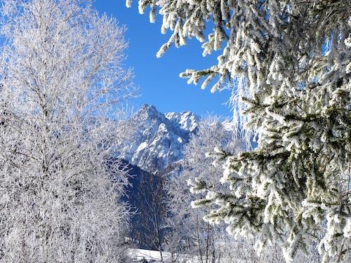 Foto d'estoc gratuïta de Àustria, gebre, hivern, muntanya nevada