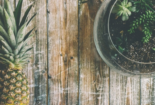 Free stock photo of wood, desk, photography, plant