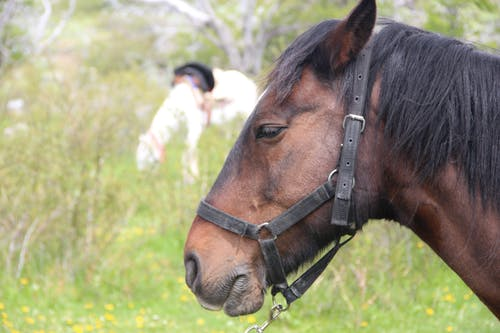 Безкоштовне стокове фото на тему «alquiler de caballos»